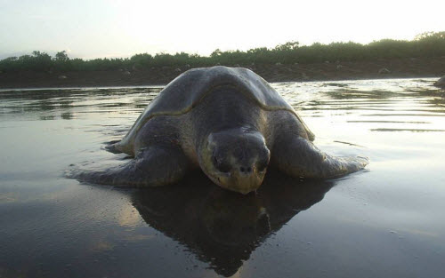 Sea Turtle Nesting Tour in Costa Rica
